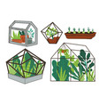 greenhouse with plants orangery with flowers vector image