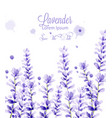lavender watercolor card delicate floral vector image vector image