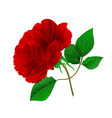 rose purple stem and leaves vintage vector image vector image