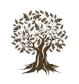 Beautiful brown oak tree silhouette isolated vector image vector image