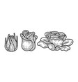 rose blooming stages sketch vector image