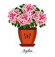 azalea plant in pot icon vector image vector image