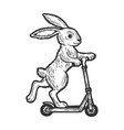 bunny riding on scooter sketch engraving vector image vector image