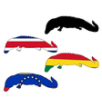 Caiman flags vector image vector image