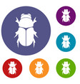 chafer beetle icons set vector image vector image