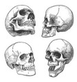 hand drawn skull sketch anatomical skulls in vector image