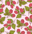 Raspberry pattern vector image vector image