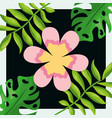 tropical leaves pink flower palm monstera dark vector image vector image