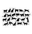 cat activity silhouettes vector image vector image