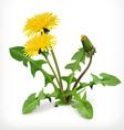 dandelion flowers icon vector image vector image
