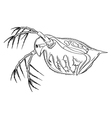 Daphnia vector image vector image