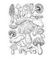 mushrooms sketch