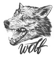muzzle of a wolf wildlife hand drawn vector image vector image