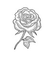 rose flower with leaf black engraving vintage vector image vector image