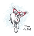 Funny smooth-haired chihuahua wearing glasses vector image vector image