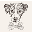 Sketch Jack Russell Terrier Dog with bow tie Hand vector image vector image