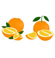 orange whole half and slice of orange with leaves vector image
