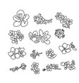 set cherry blossoms flower collection vector image vector image