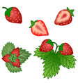 set of strawberry fruits and green leaves vector image