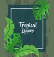 green cover monstera foliage tropical leaves vector image