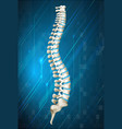 Human spine diagram on blue vector image vector image