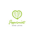 peppermint mint leaves and heart love logo design vector image