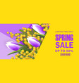 spring sale square banner with mimosa vector image