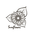 sunflower isolated vector image vector image