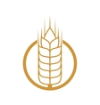 wheat ears food plant agriculture icon vector image