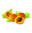 Apricot with leaves vector image