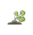 garden strawberry plant growing in the ground vector image