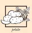 hand drawn potatoes vector image vector image