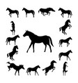 set wild horse silhouette vector image vector image