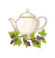 black currant tea vector image