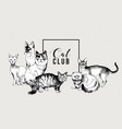 cat club banner vector image vector image