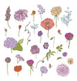 hand drawn colorful floral elements set vector image vector image
