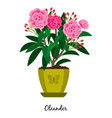 oleander plant in pot vector image