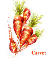 carrots isolated watercolor fresh spring vector image vector image