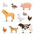 different domestic animals on farm geese ducks vector image