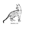 hand drawn orientalcat vector image vector image