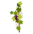 vine vertical twig isolated icon grape bunch vector image vector image