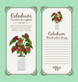 vintage label with caladium plant vector image vector image