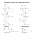 Chemical formulas of natural cannabinoids vector image vector image