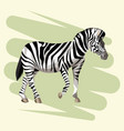 beautiful zebra drawing vector image vector image