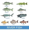 River Fish Identification Slate With Names vector image