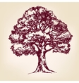 Tree hand drawn llustration sketch vector image vector image