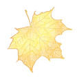yellow maple leaf isolated on white background vector image vector image