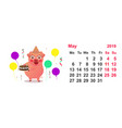 calendar may 2019 funny pig holds birthday cake vector image vector image