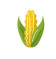 delicious and healthy cob corn food vector image