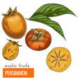 persimmon color vector image vector image